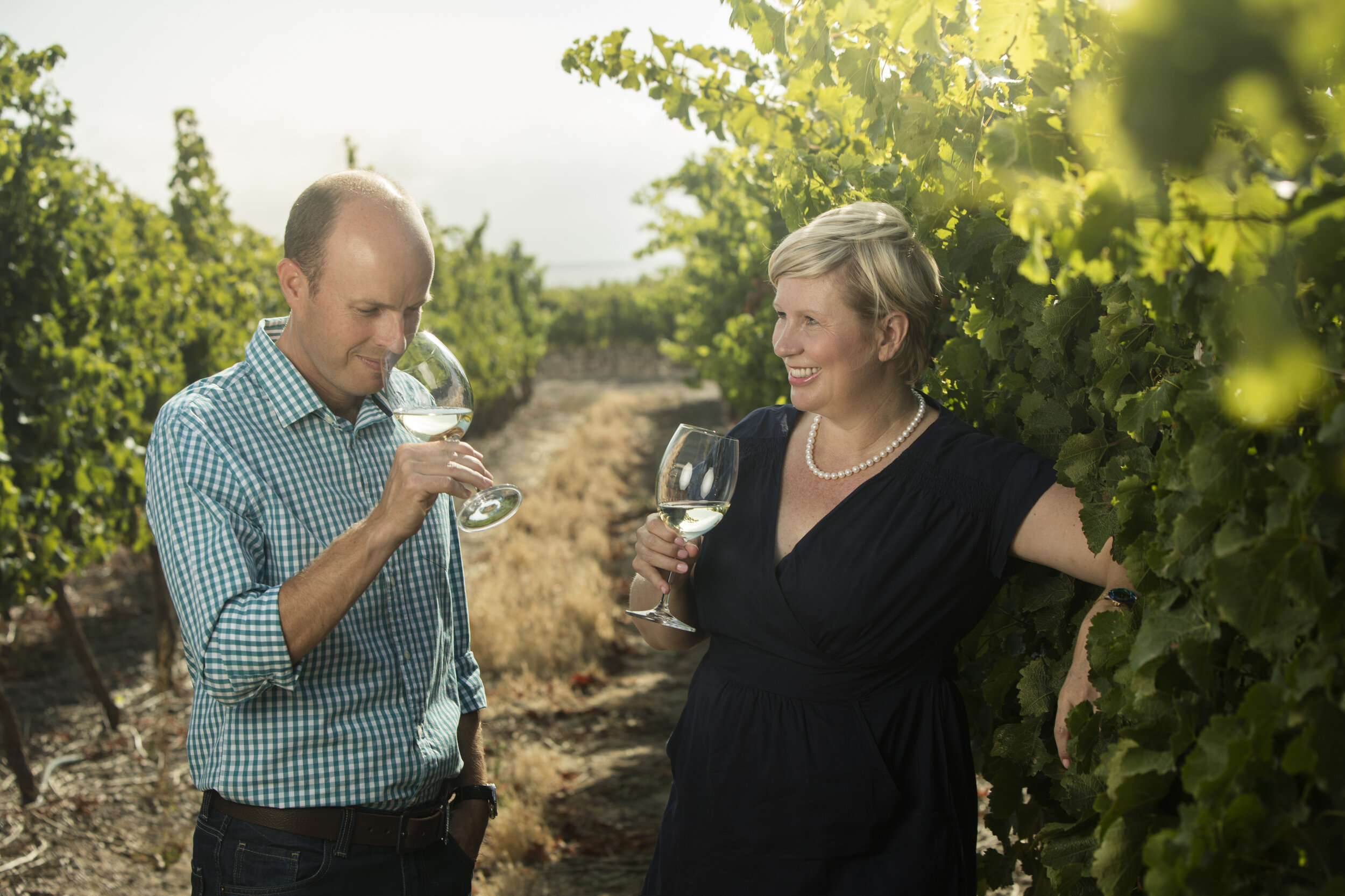 south african wine vintage guide