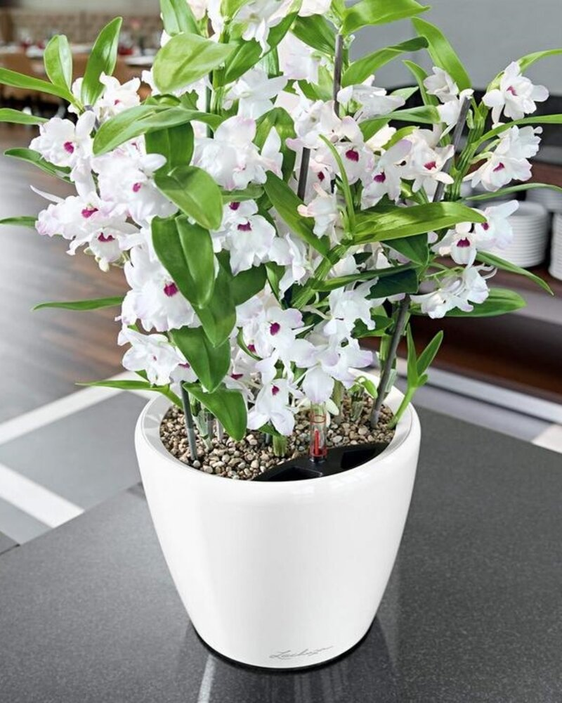 lily of the valley planting guide