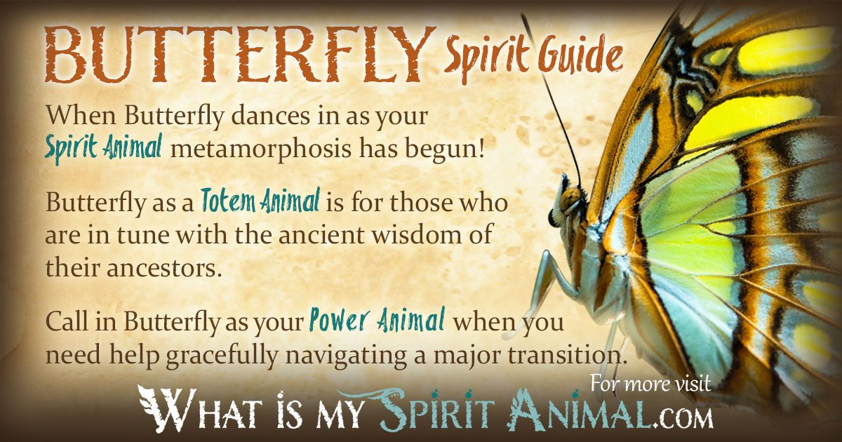 how do you find your spirit animal guide