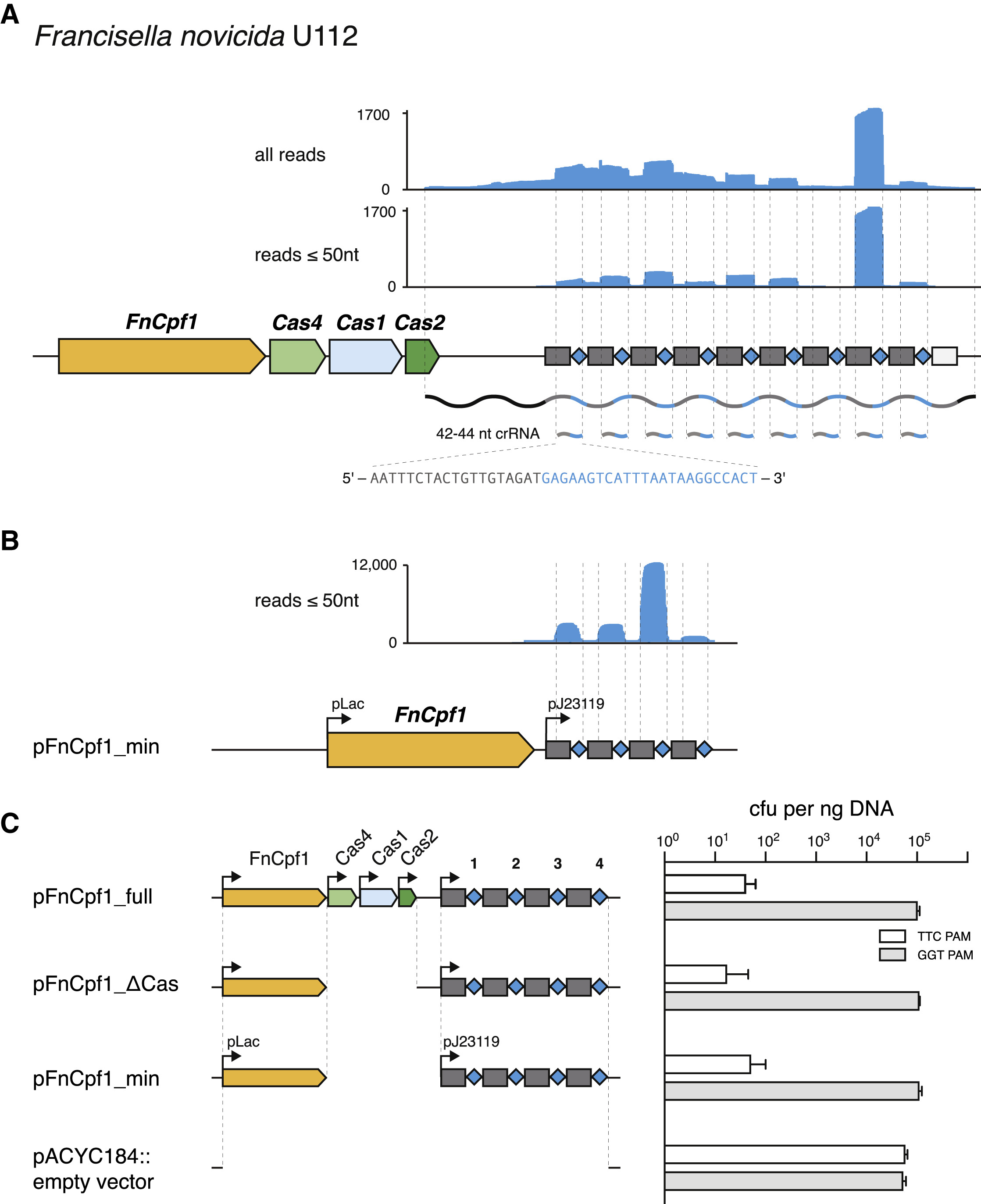 crispr cas systems and rna guided interference