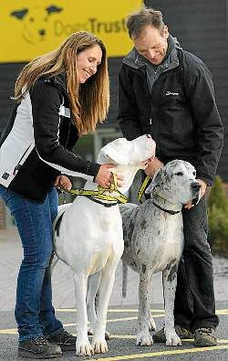 guide animals for the blind