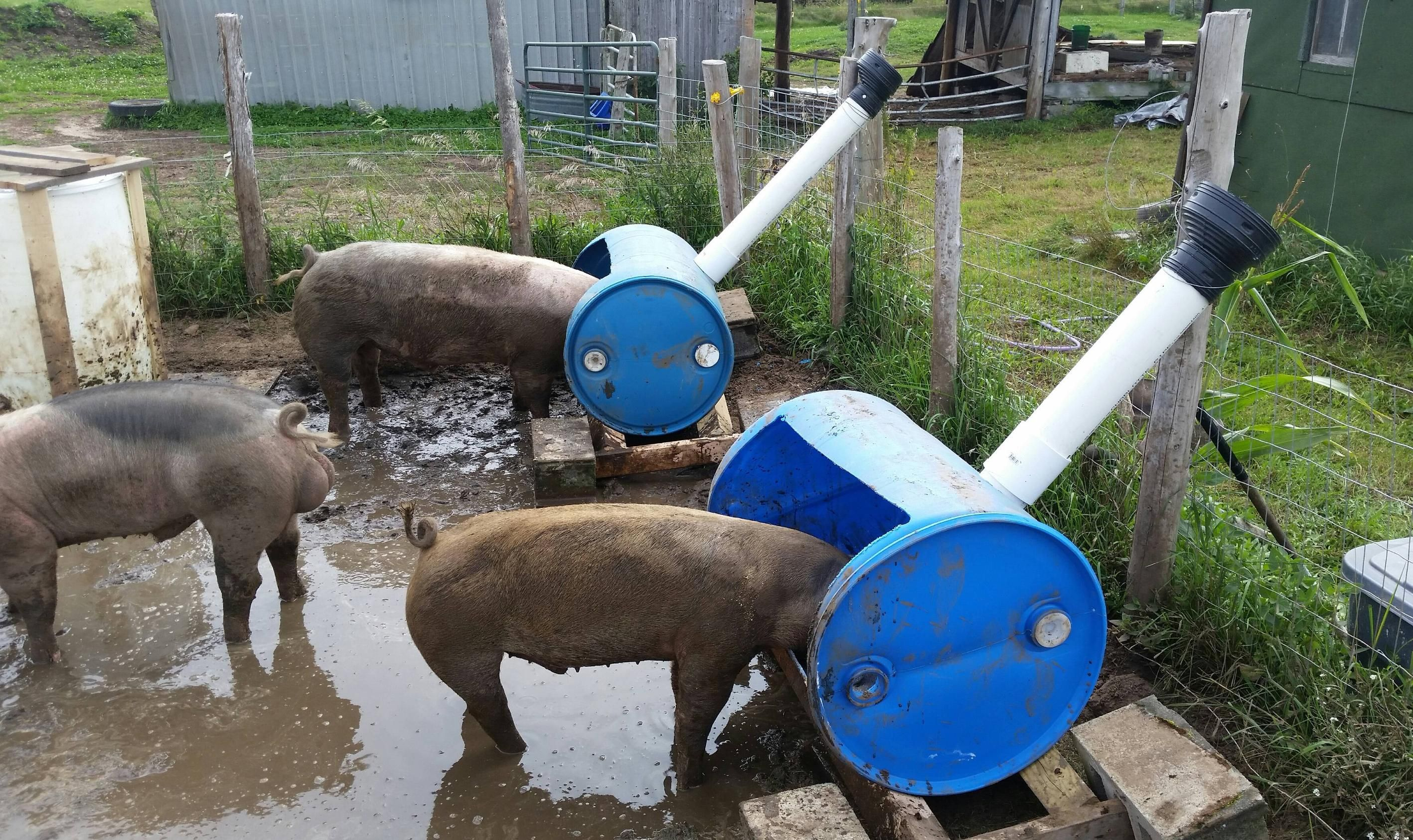 pig feeding guide south africa
